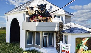 Paws in Motion 2015 - A&S Homes - Home Builders Winnipeg