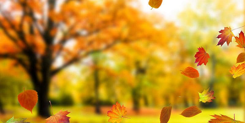 fall-leaves-and-trees